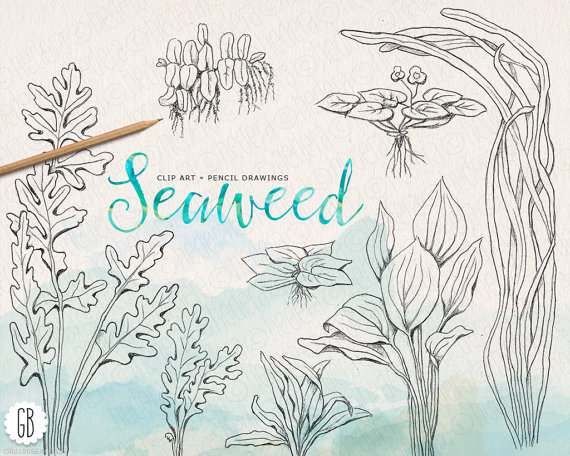 Drawn seaweed seagrass Sea from invitation Seaweeds drawn