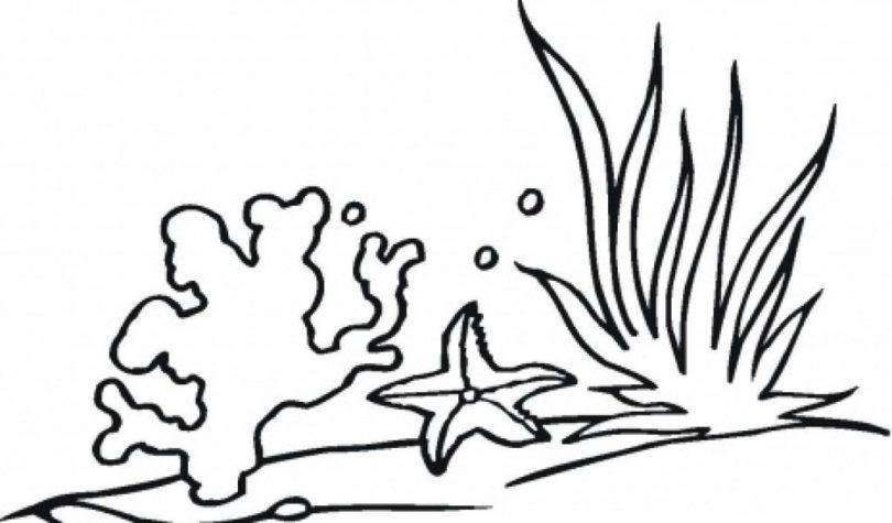 Seaweed clipart sea plant #6