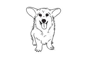 Drawn corgi  Templates Themes puppy Corgi illustration