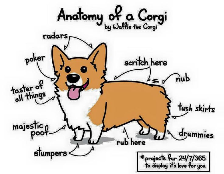 Drawn corgi  Images best different of on