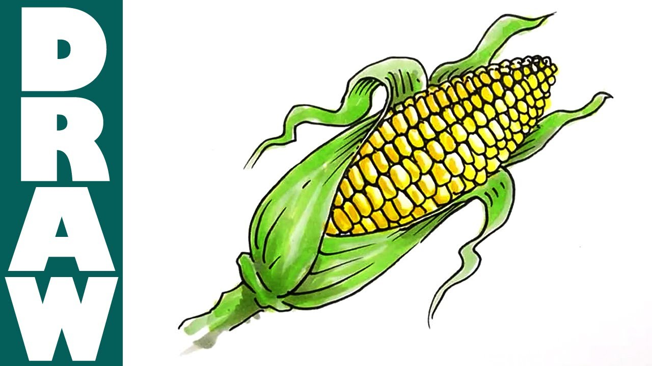 Drawn corn How to Corn YouTube Corn