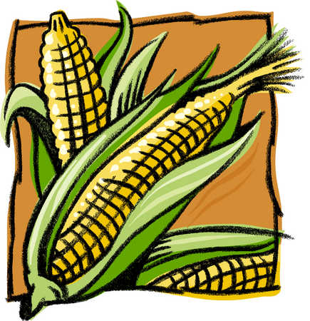 Drawn grain outline Corn corn of drawing A