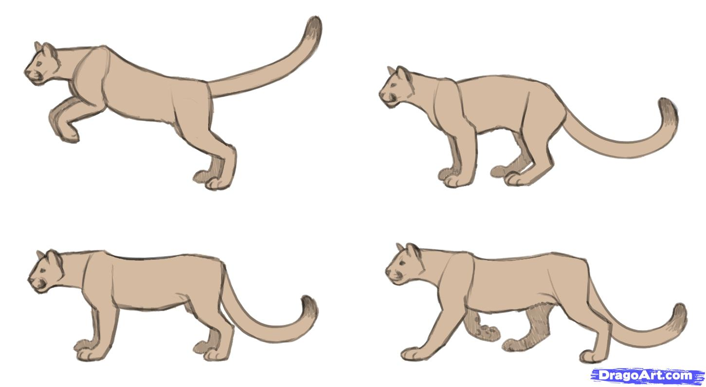Drawn cougar Drawing how to draw cougars