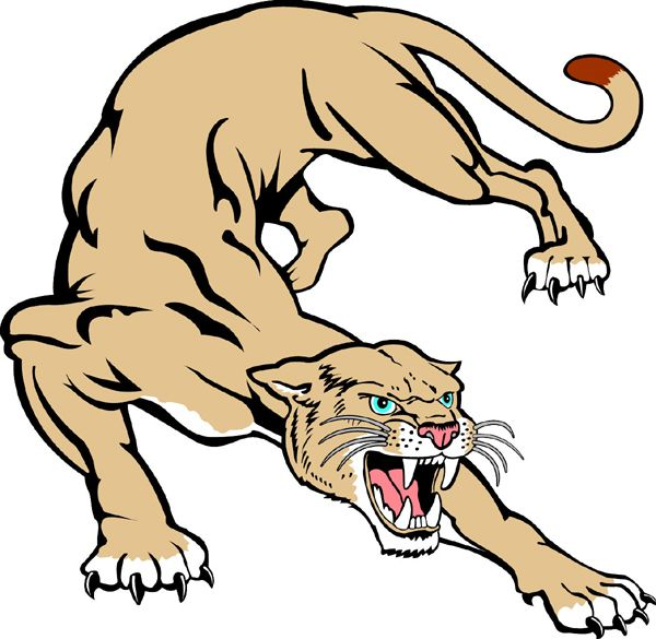 Drawn cougar Drawings  Cougar mascot cougar+mascot