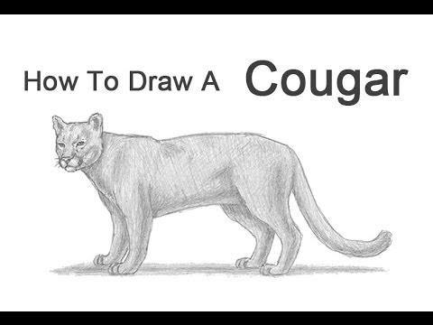 Drawn cougar Lion) How to a How