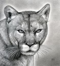Drawn panther realistic Huge Big and lion draw