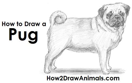 Drawn pug pug dog Draw How a Dog to