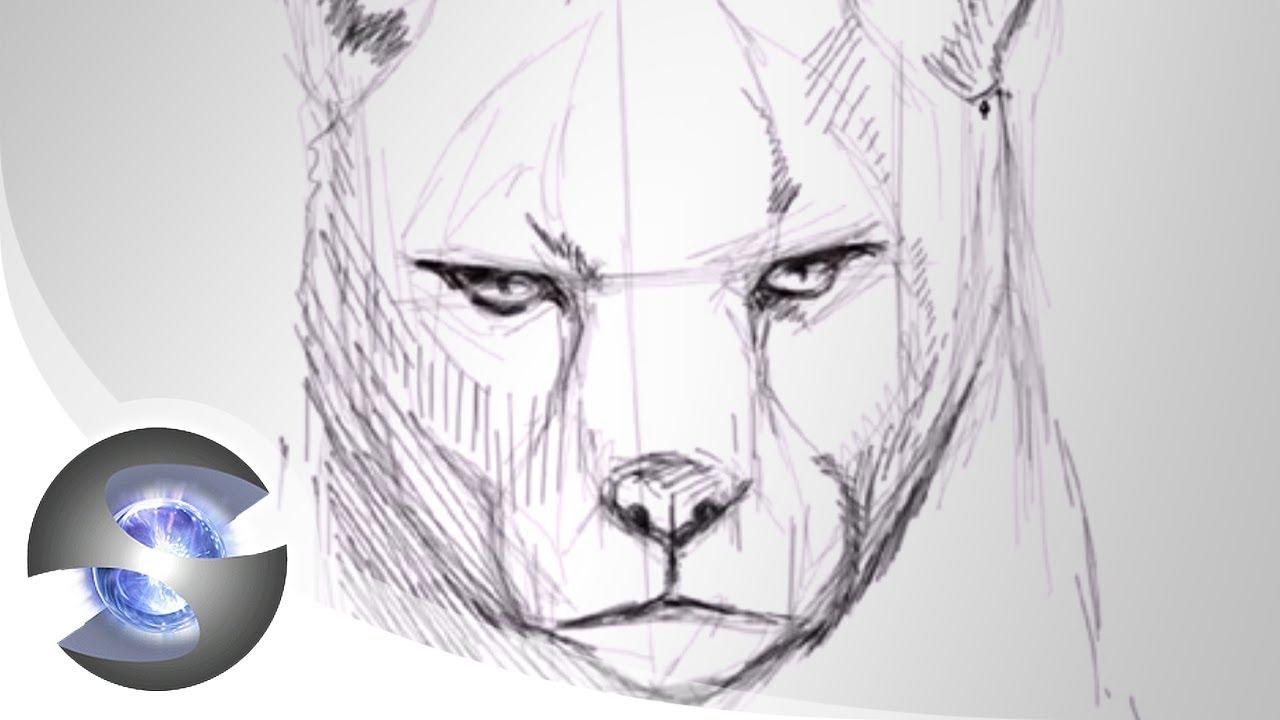 Drawn jaguar cougar Drawing  YouTube Cougar