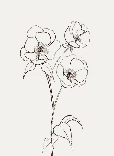 Drawn poppy flower leaf … Tattoo Bernadette_Pascua Pinteres…
