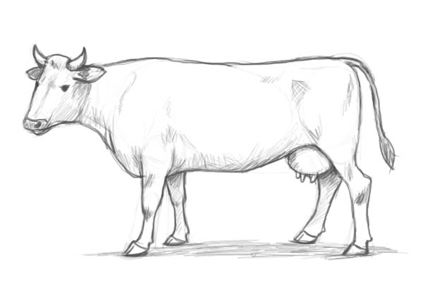 Drawn cow Step result! to Factory a