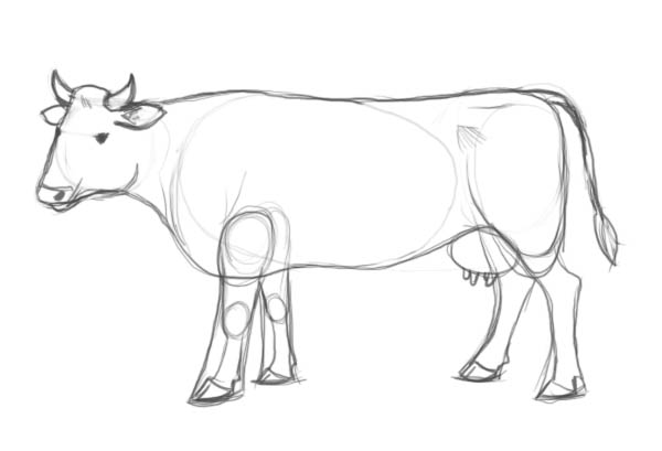 Drawn cow Step drawing to Factory a