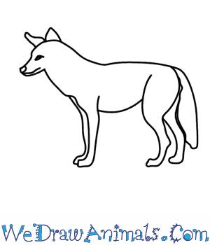 Drawn coyote #8