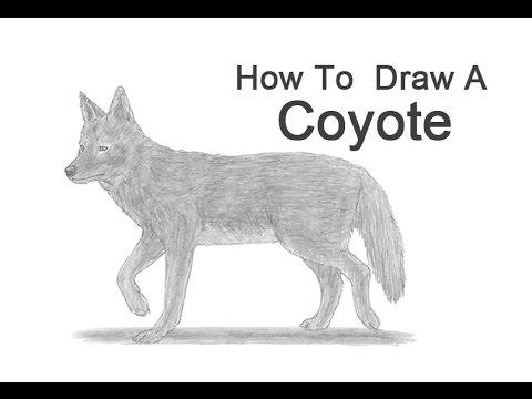 Drawn coyote #11