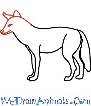 Drawn coyote #3
