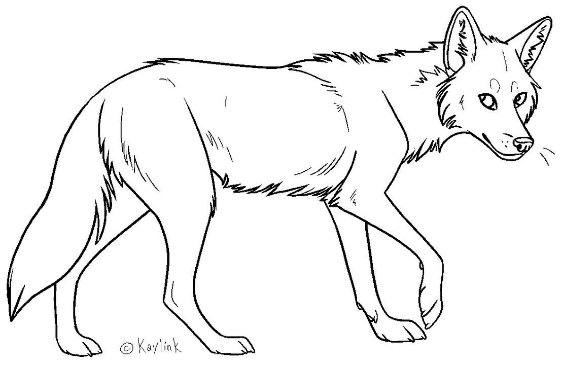 Drawn coyote #10