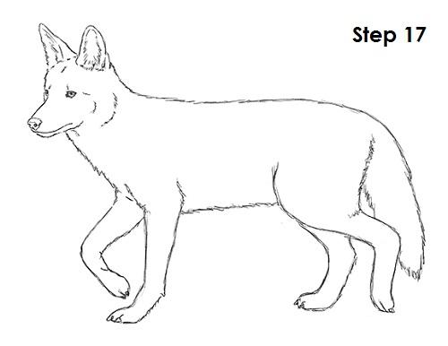Drawn coyote #5