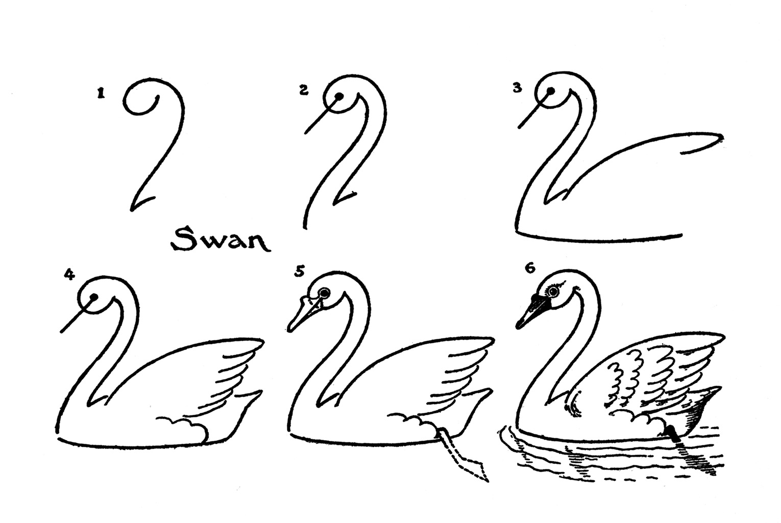 Drawn swan For  Coyote Coloring Kids