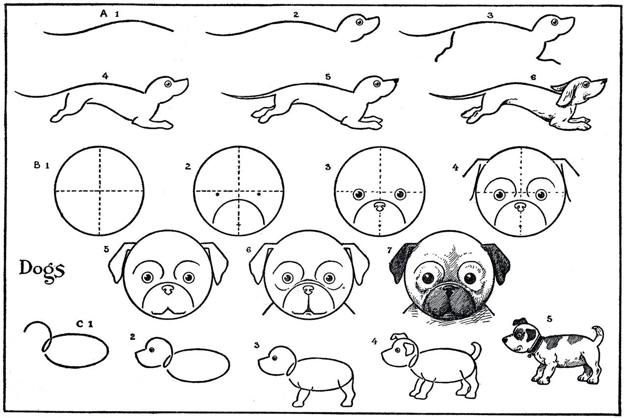 Drawn pug step by step Dachshund Coyote Pages Kids Printable