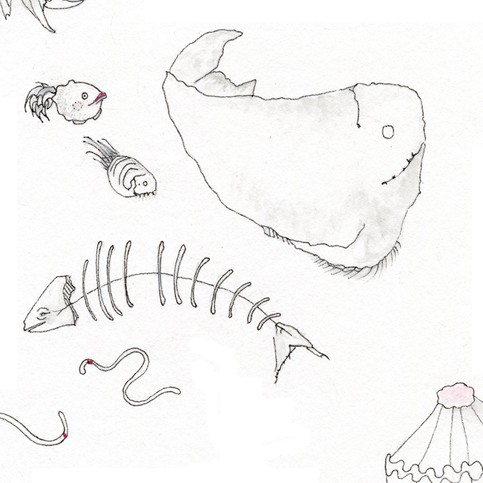 Drawn sea life deep sea creature Etsy Creatures to  of