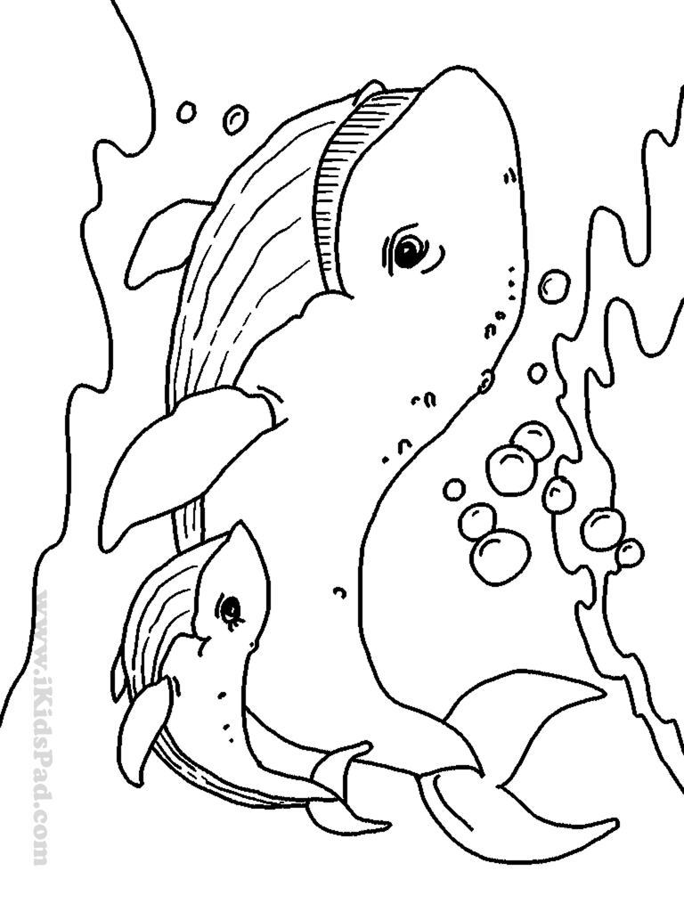 Drawn sea life marine animal Epic Creatures For Seasonal Pages