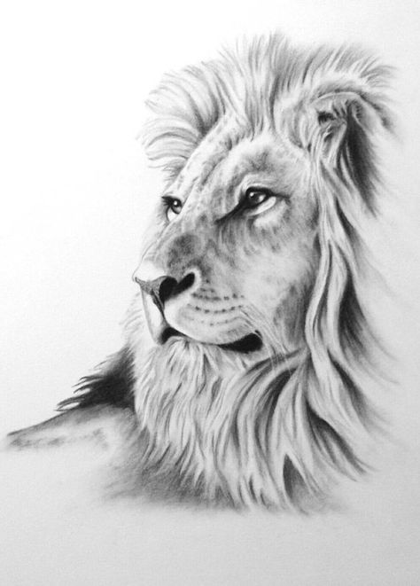 Drawn profile lion Drawing Sketch Best African Lion