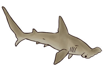 Drawn sea life realistic drawing WikiHow Hammerhead Draw a how