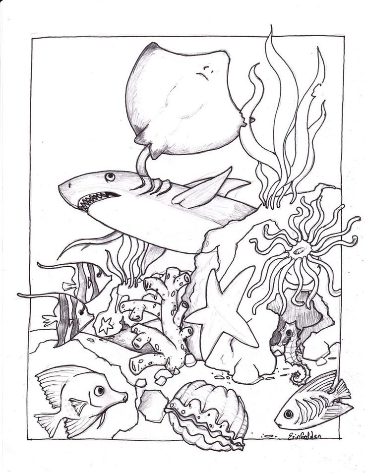 Drawn sea life ocean animal Pinterest How Draw Quality Pages