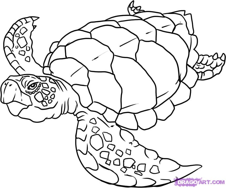 Drawn sea life line drawing A Turtle Coloring Animal Step