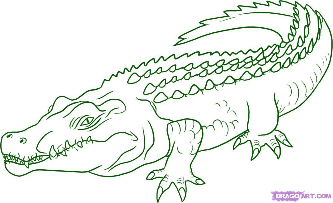 Drawn crocodile Of Draw A 000000005853 1