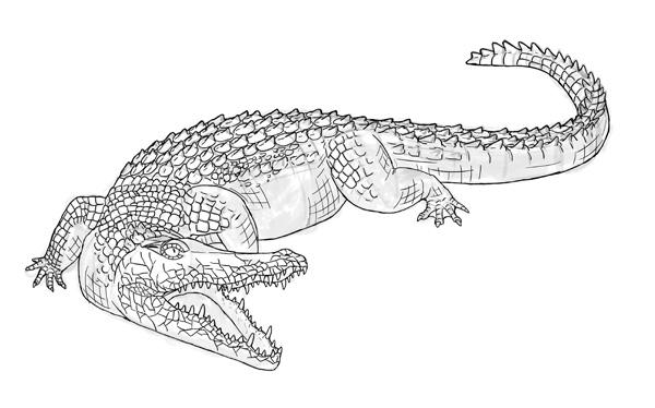 Drawn crocodile To by step Draw to