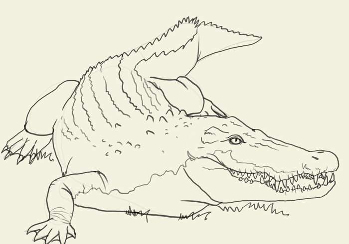 Drawn crocodile Pages Drawing jpg Of Sketch