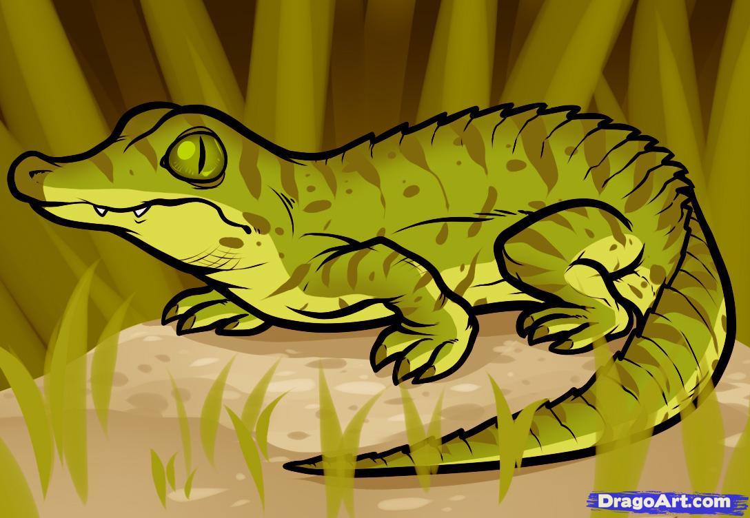 Drawn reptile baby Crocodile draw crocodile to Baby