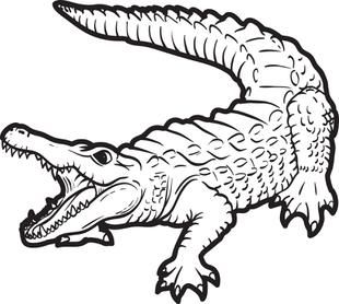 Caiman clipart wild animal Self art Coloring Alligator The
