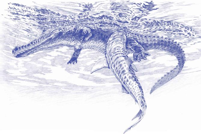 Drawn shark crocodile Fossils Poop Bitten WIRED (No