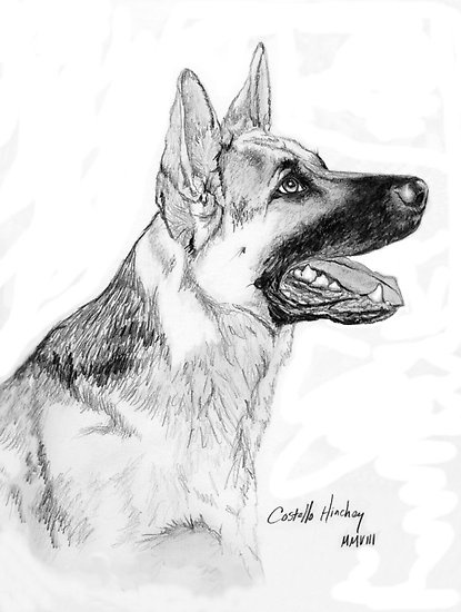 Drawn hawk german About German dogs pet German