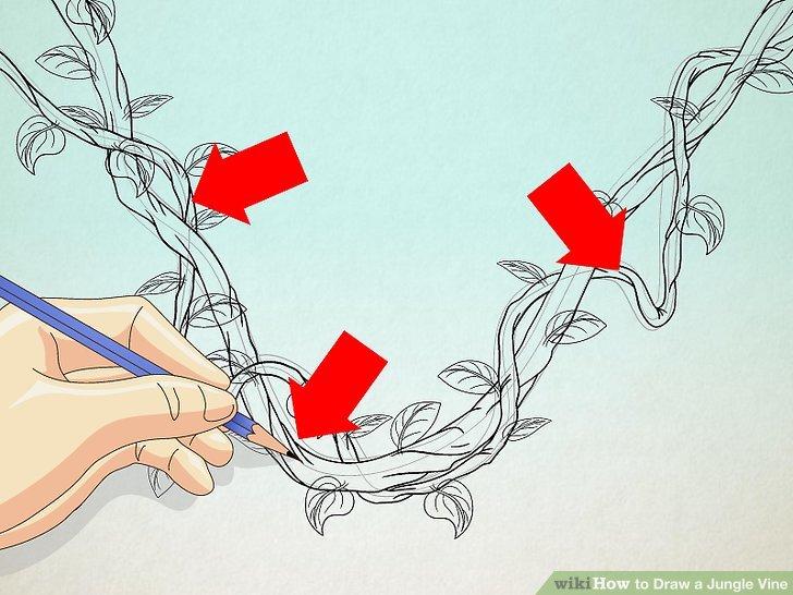 Drawn ivy branch How Draw Step Draw Steps