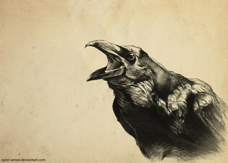 Drawn crow Sketch Art Crow Crow Drawing