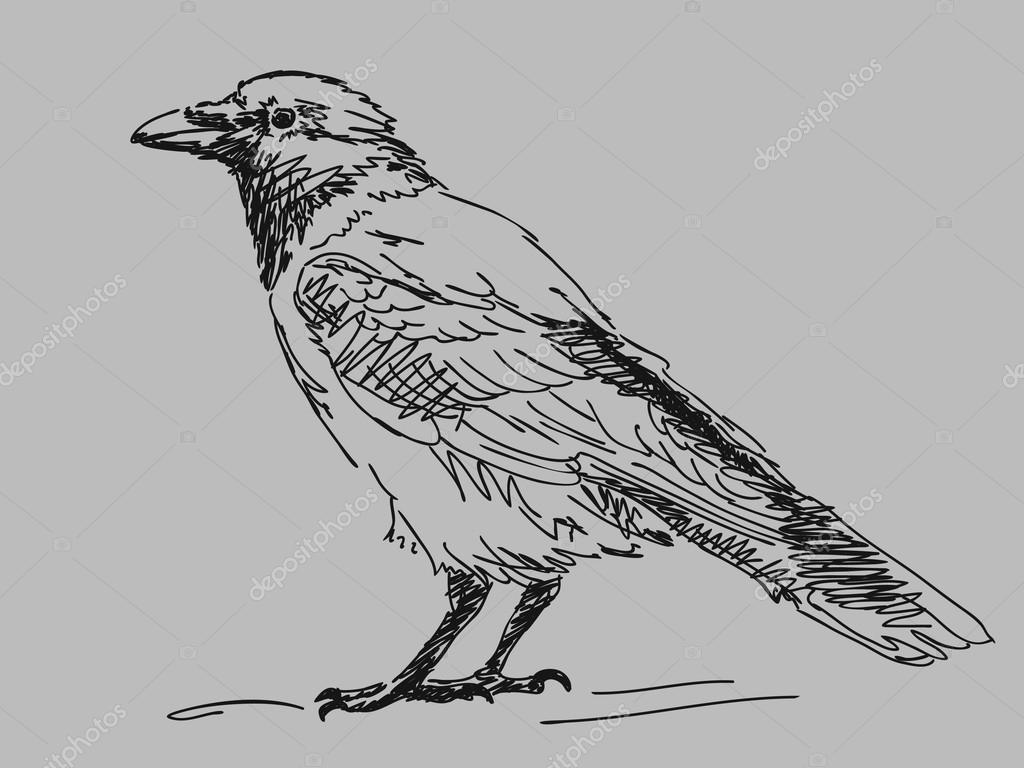 Drawn crow Drawn #12636375 drawn Stock crow