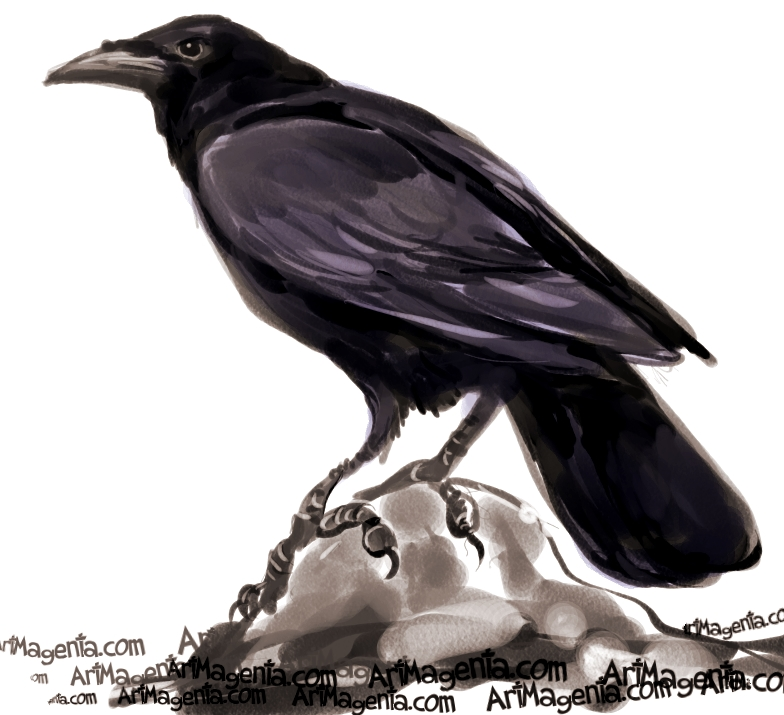 Drawn crow Crow Birds: American Crows