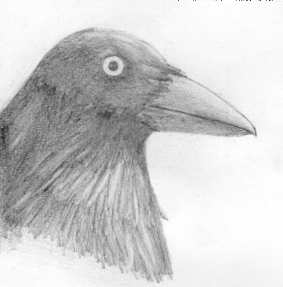 Drawn crow Drawn Crow Shi Crow on