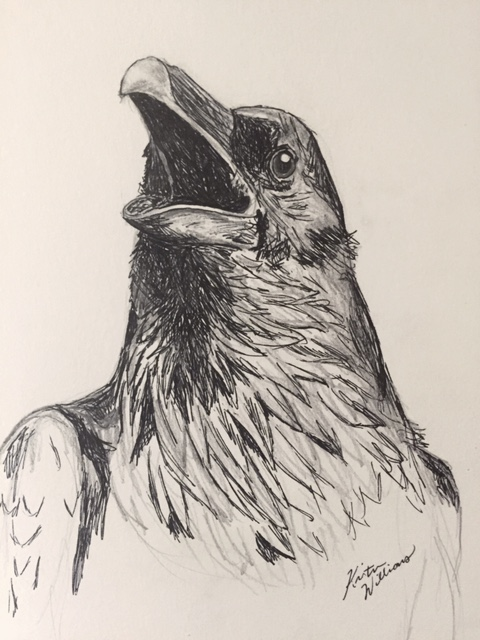 Drawn crow Share Crows you drawing and