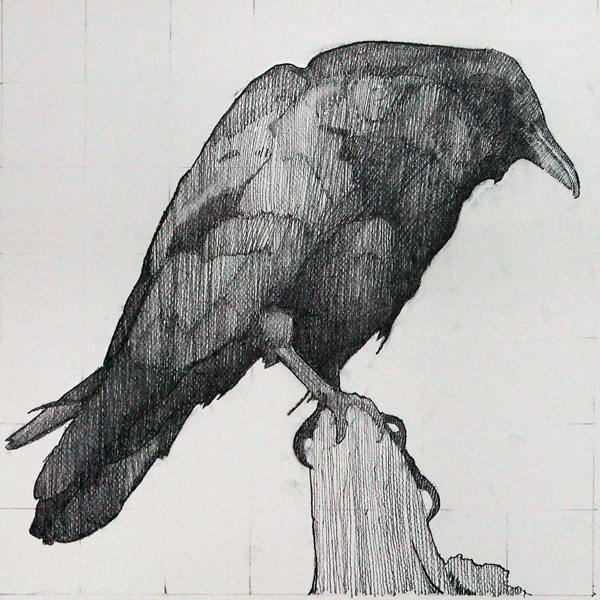 Drawn raven perched Ravens Canson Pollien 14 Robert