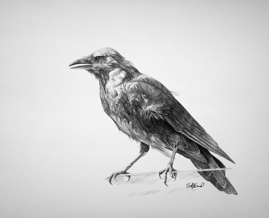 Drawn crow Pic Images Realistic Drawing Crow
