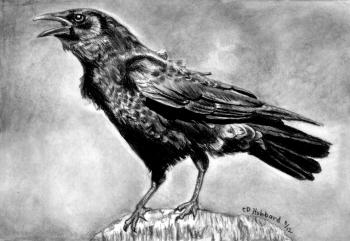 Drawn crow Realistic to  by Crows