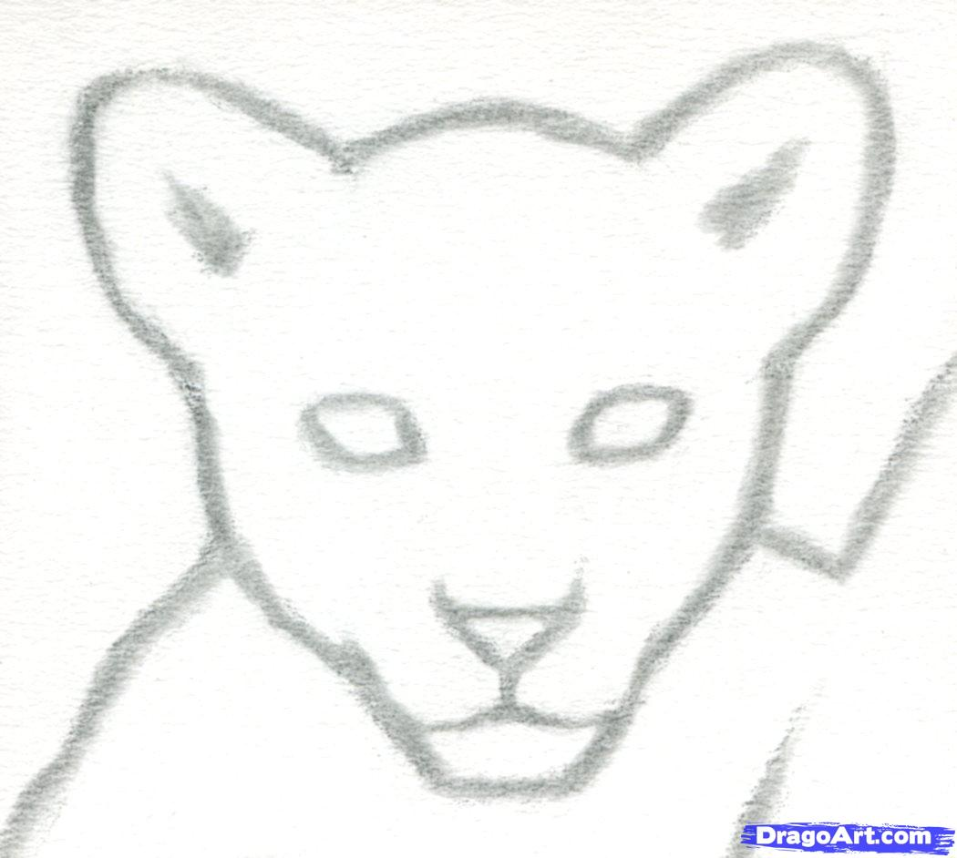 Drawn cub Cubs to 3 Lion draw
