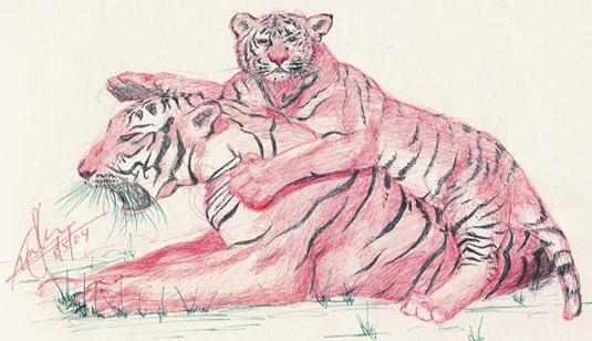 Drawn cub In Sketch and Bengal Drawn