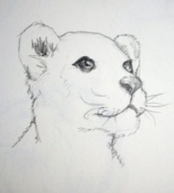 Drawn cub Cub Pencil Art Images Drawing
