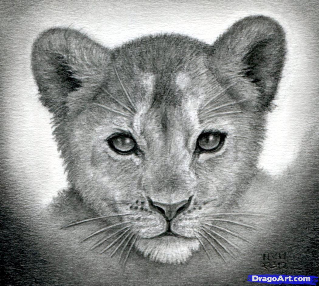 Drawn cub A sketching lion draw cubs