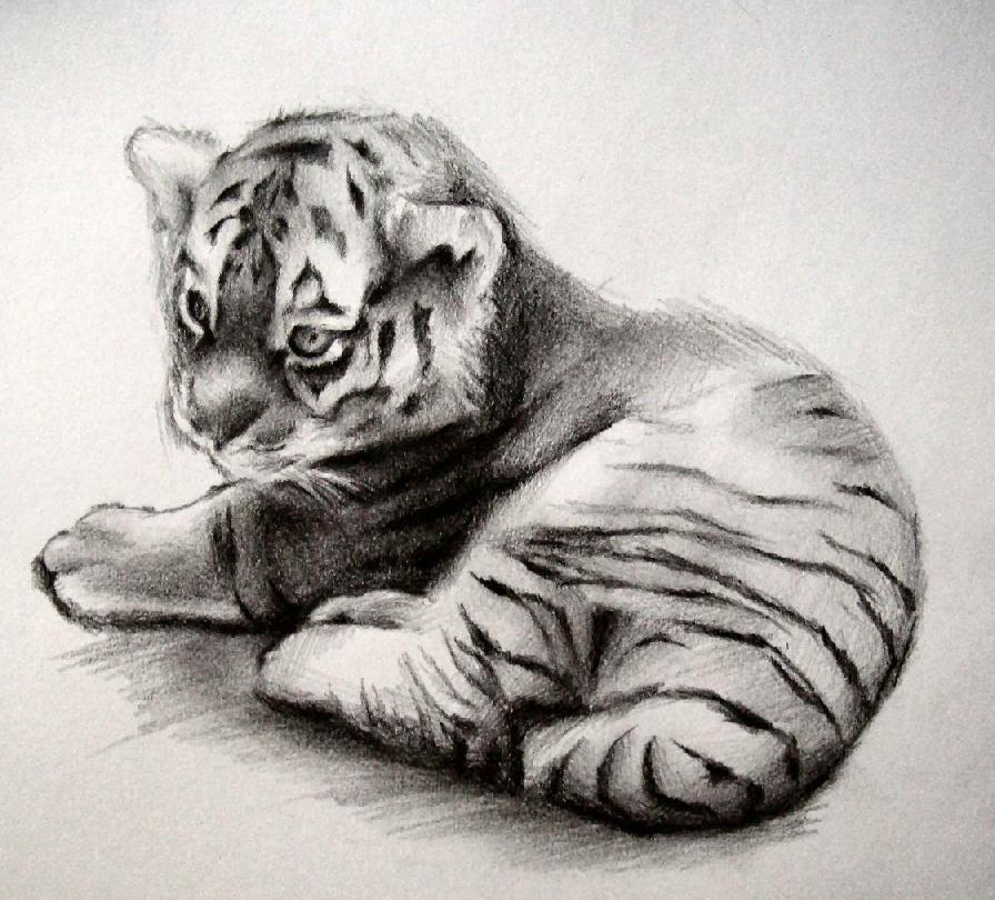 Drawn cub Pinterest pencil Google  pic