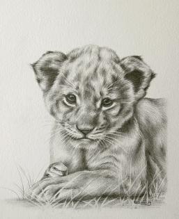 Drawn cub Cub cubs cub Lion cub
